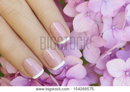 Short pink lilac French manicure with hydrangea.