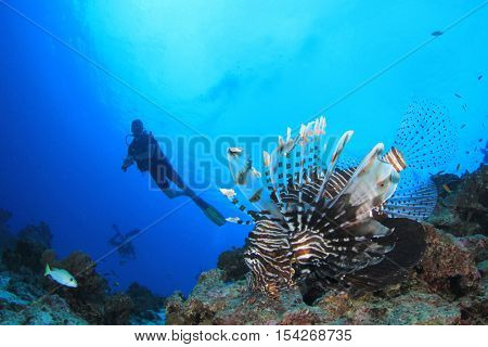 Lionfish fish and scuba diver