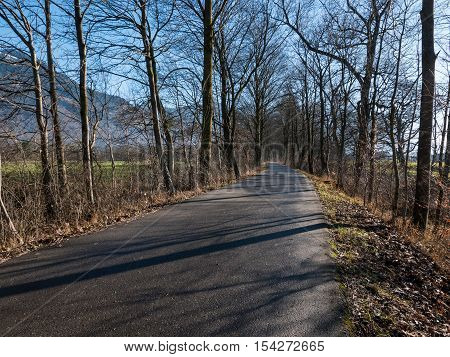 A road leading through a forest with trees either side