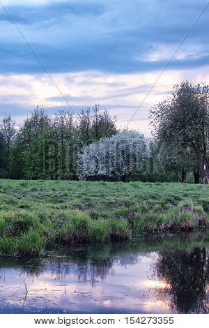 landscape evening night park with blooming apple trees