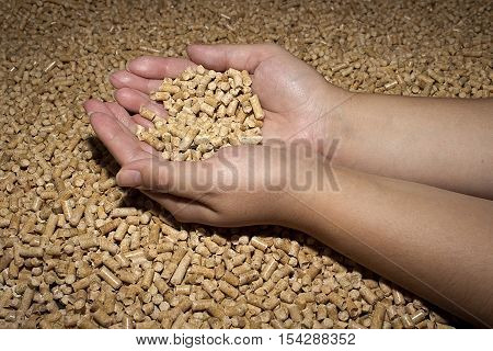 Wood pellets in the background. Biofuels. Cat litter. Female hands.