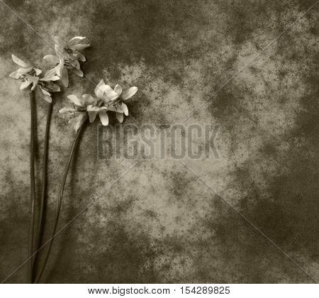 Flower on dark background - condolence card