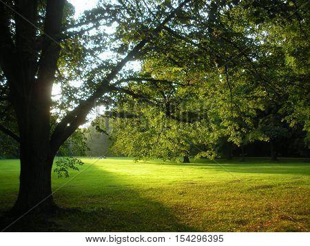 Beautiful sunset in Tiergarten park in Berlin