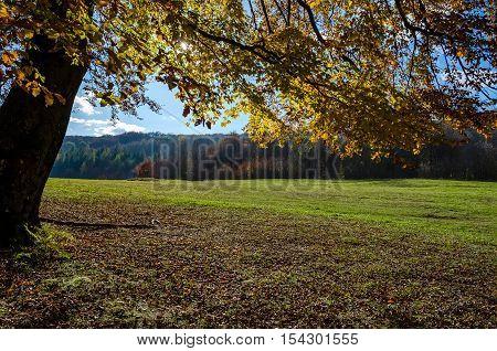 melancholy autumn landscape, overhanging trees, blue sky