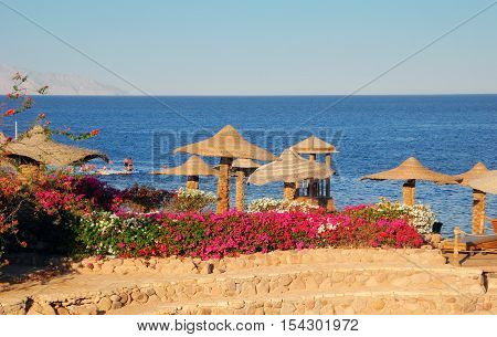 Sharm El Sheikh Egypt - August 20 2016: Beach umbrellas and flowers on the coral beach in Sharm El Sheikh.