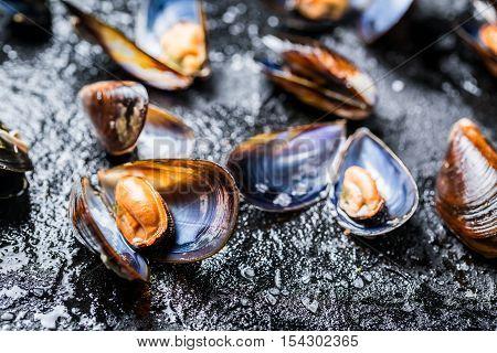 Closeup of mussels on black rock on black rock