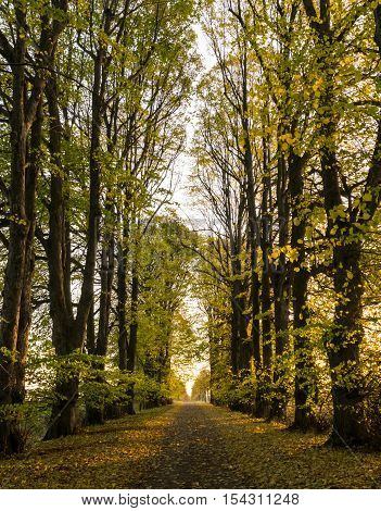 Tree-lined gravel road on a sunny autumn day with yellow and green leaves on the ground.