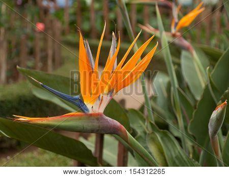 Flowers of Vietnam, flowers seen in Dalat