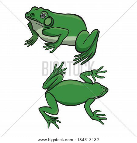 Two sitting green frogs isolated on white background