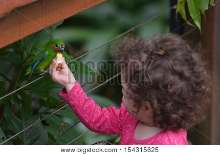 Little Child Feeds A Fig Parrot