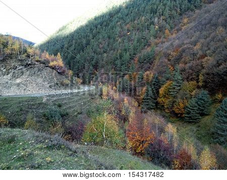 Autumn colored trees besides a mountain road