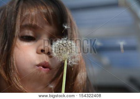 Little girl (age 6-5) blow Dandelion plant during Autumn season