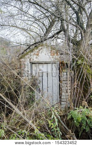 Tree and plants growing on abandoned door