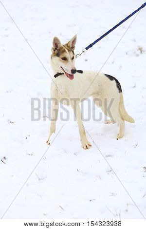Young dog on the fresh snow in winter