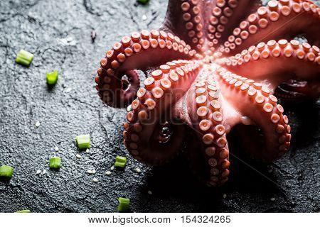 Freshly cooked purple octopus on black rock