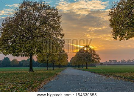 Landscape of autumn trees along the path when the sun is setting.