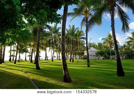 Field Of Grass And Coconut Palms On Mauritius
