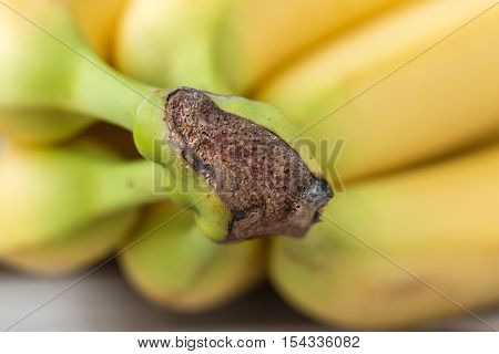 horizontal close up image of a group of bananas with the knot at the front