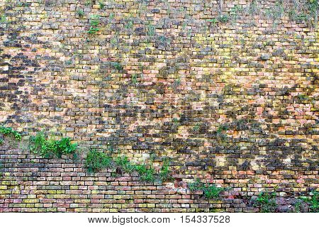 old weathered wall of red and orange bricks overgrown with grass - texture or background
