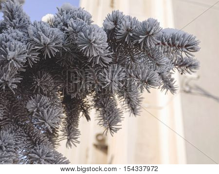 Pine Tree Covered With Snow. Toning Winter Landscape
