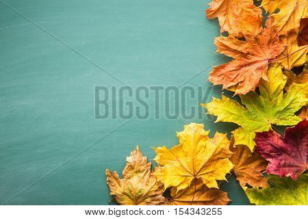 Colorful autumn leaves on chalkboard. Top view.