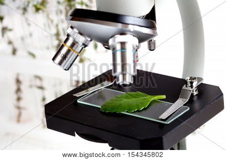 test plant samples on microscope slide in laboratory close up