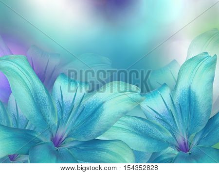 blue- turquoise lilies flowers on turquoise-purple-blue blurred background . Closeup. Bright floral composition card for the holiday. Nature.