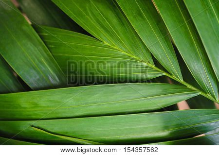 Close-up Of Detailed Rainforest Jungle Leaves For Background