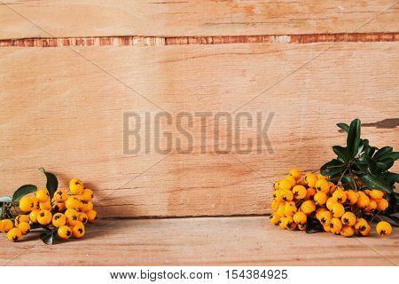 Pyracantha isolated on wood background. Nature objects