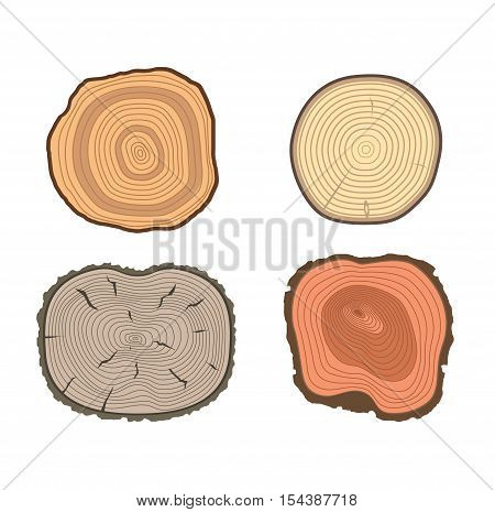 Set of tree slices wood trunk section natural timber. Slice of tree trunk. Aging round tree slices lumber pattern ring isolated bark.