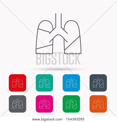 Lungs icon. Transplantation organ sign. Pulmology symbol. Linear icons in squares on white background. Flat web symbols. Vector