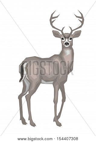 Vector image of the American mule deer. Isolated on a white background.