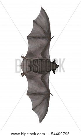 Flying bat isolated in white background - 3D render