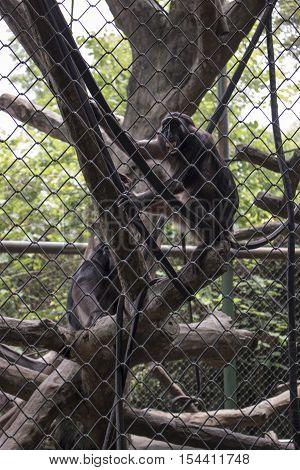 sad funny monkey inside cage endangered species