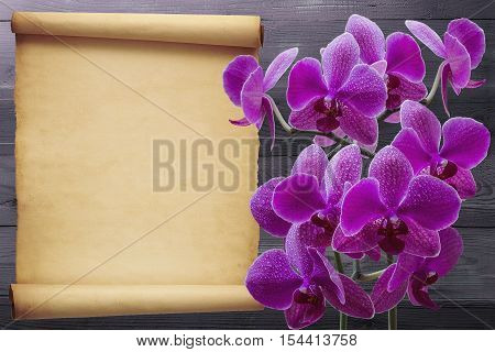 Pink orchid flower on wooden background with revenge for text