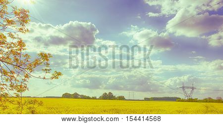 Vintage summer landscape. Rapeseed field in Hungary. Brassica napus. Hungarian countryside. Shining sun. Cloudy blue sky. High voltage towers. Sunny day. Warm cloudy dry calm weather.
