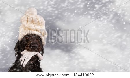 Black dog in winter outfit, close-up.