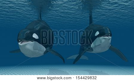 Computer generated 3D illustration with two killer whales