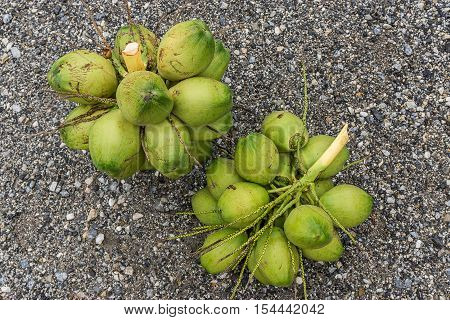 Fresh Green Young Coconuts On Rocky Background