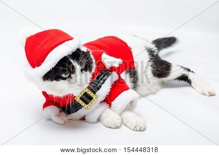sleeping tired Black and white cat in Santa Claus hat sitting on studio white background. resting and looking right for greeting card. poster
