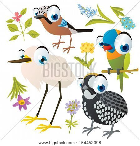 vector cute colorful cartoon isolated birds and flowers illustrations collection: jay, parrot, heron, montezuma quail