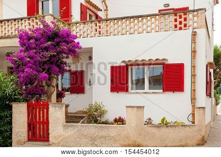 Wonderful white two-story house with red wooden shutters and  In the yard of various flowering plants and marvellous Jacaranda at the gate.