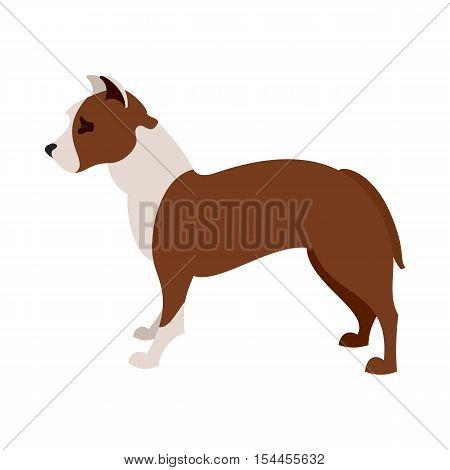American pit bull terrier animal dog, domestic breed vector illustration