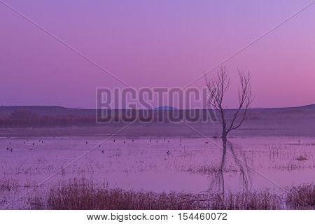 sunrise refection at Bosque del Apache in New Mexico