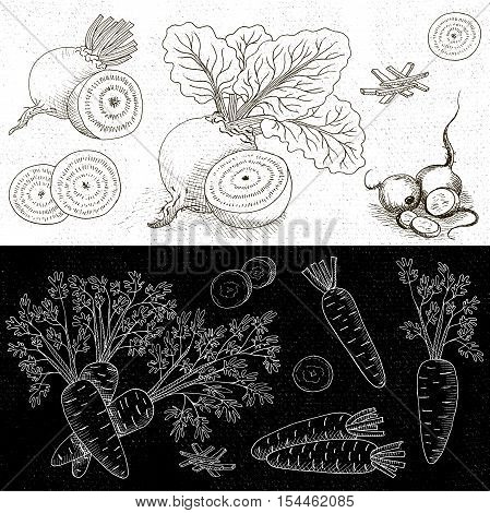 Set of chalk hand drawn, in sketch style, food and spices, black and white chalkboard background. Vegetable set beet leaves, beets sliced, carrots with leaves, sliced carrots. Hand drawn vector illustration.