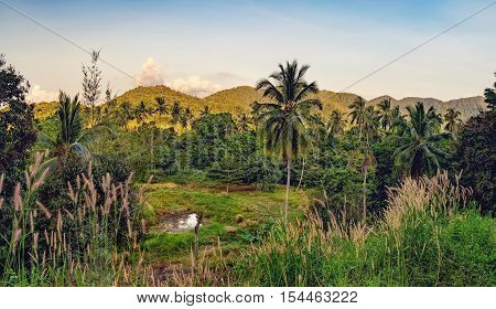 The palm trees and dense tropical vegetation under the blue sky, Mu Koh Chang National Park, Chang island, Thailand
