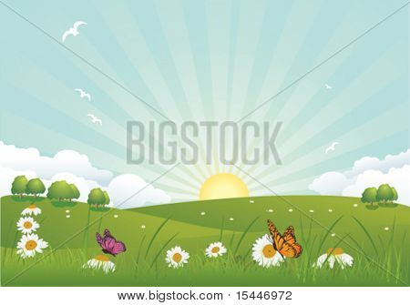 Spring  landscape with a daisy
