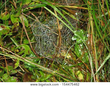 Dewdrops on a spider web in the morning
