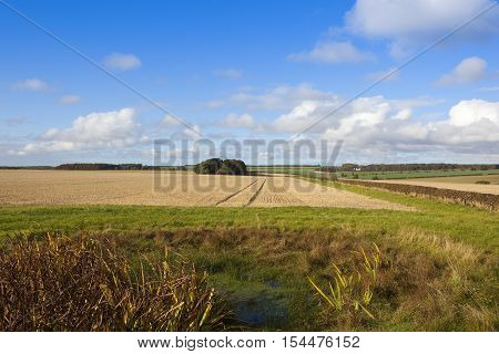 Dew Pond And Wheat Field