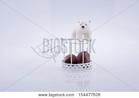 Polar bear c Polar bear near an open cage with chesnut on white background